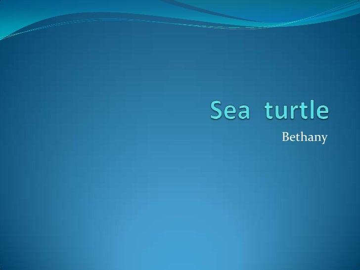 Sea  turtle<br />Bethany<br />