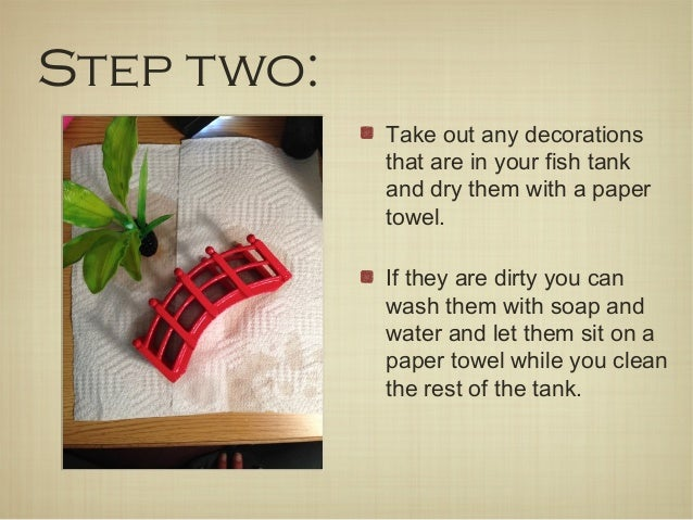 How to clean your betta fish tank in 8 easy steps for How to properly clean a fish tank