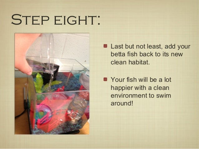 How to clean your betta fish tank in 8 easy steps for Cleaning betta fish tank