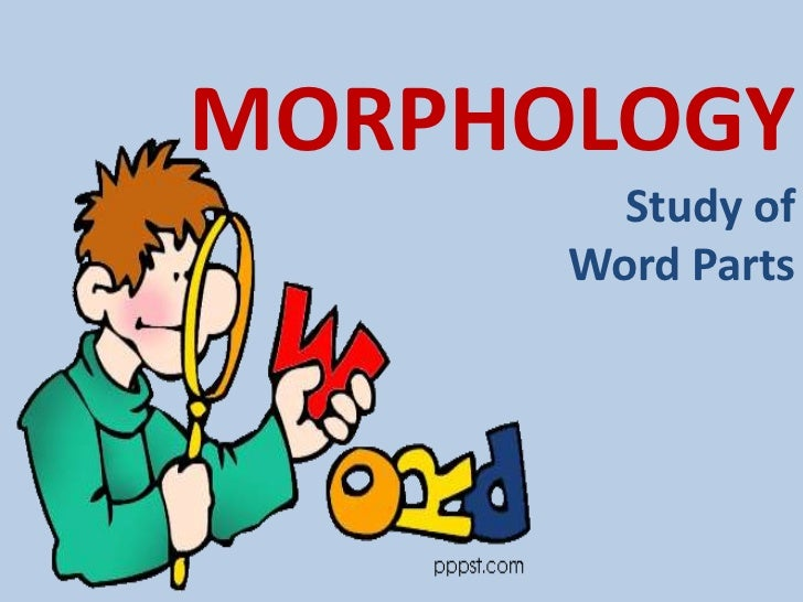 morphology Packer morphology 2 of morphemes without changing its meaning we can find {buy} in buying, buys, and {er} in seller, fisher, as well as buyerand {s} can be found in boys, girls, and dogs the more combinations a morpheme is found in, the more productive it is said to be.
