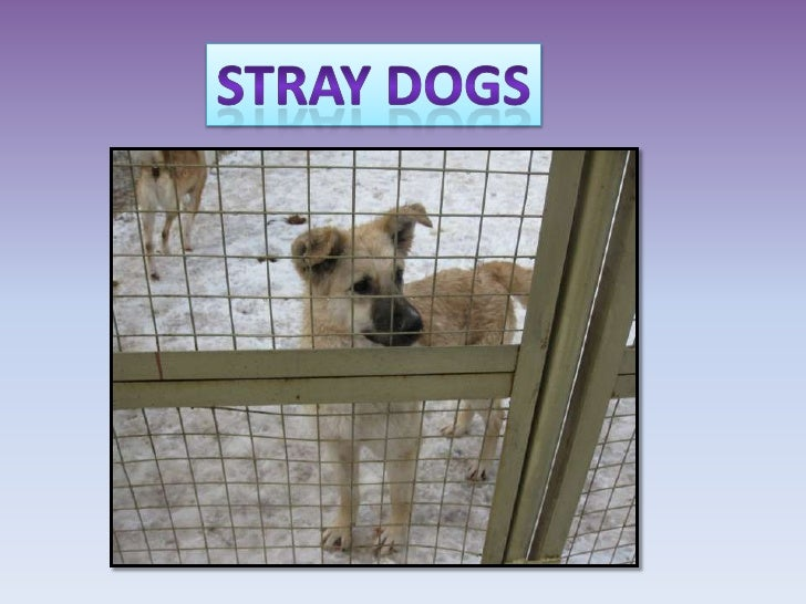 Stray dogs<br />