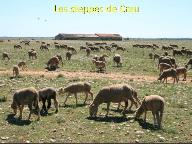 Systèmes pastoraux de PACA et changements climatiques partie 2 - BEYLIER Slide 3