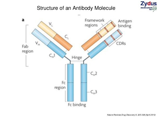 structure and function of proteins relationship marketing