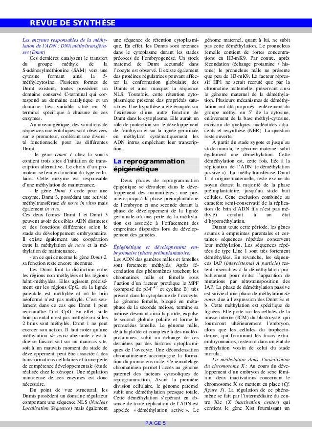 REVUE DE SYNTHÈSE PAGE 5 Les enzymes responsables de la méthy- lation de l'ADN : DNA méthyltransféra- ses (Dnmt) Ces derni...