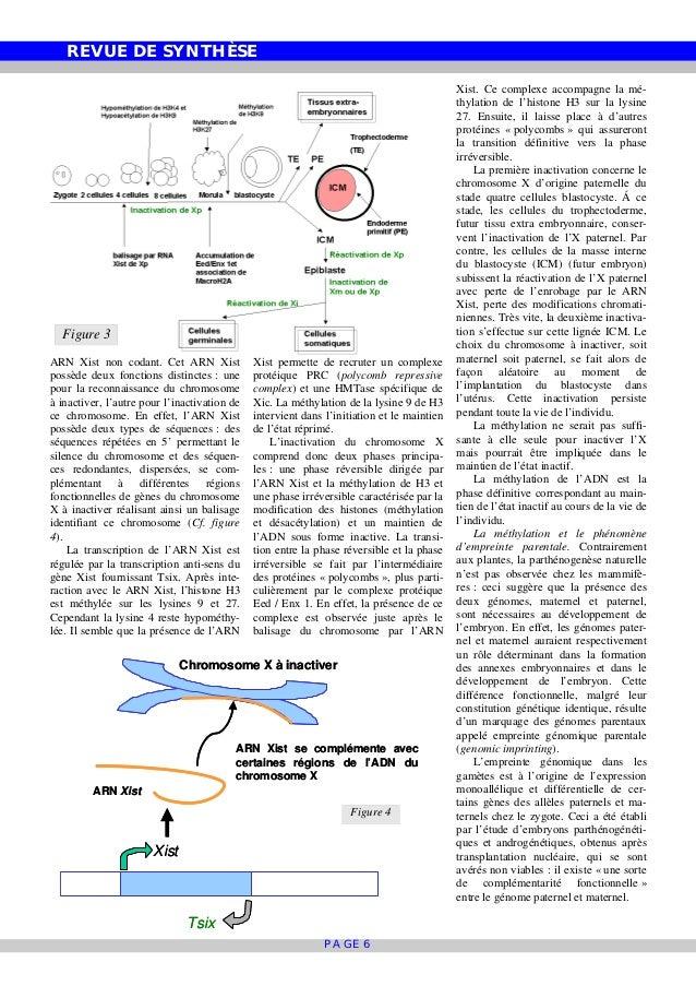 REVUE DE SYNTHÈSE PAGE 6 ARN Xist non codant. Cet ARN Xist possède deux fonctions distinctes : une pour la reconnaissance ...