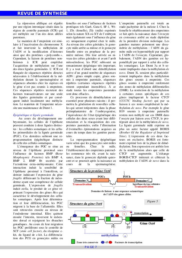 REVUE DE SYNTHÈSE PAGE 7 La répression allélique est régulée par une région intronique située dans la région de contrôle p...