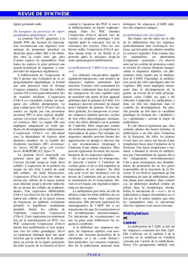 REVUE DE SYNTHÈSE PAGE 8 lignée germinale mâle. Un marqueur du processus de repro- grammation épigénétique : Oct-4 La prot...