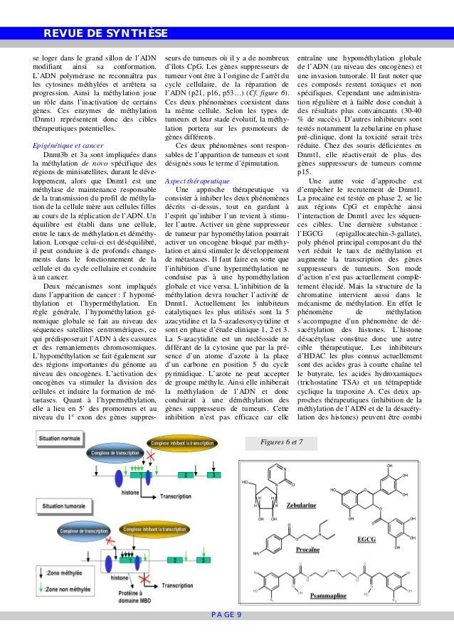 REVUE DE SYNTHÈSE PAGE 9 se loger dans le grand sillon de l'ADN modifiant ainsi sa conformation. L'ADN polymérase ne recon...