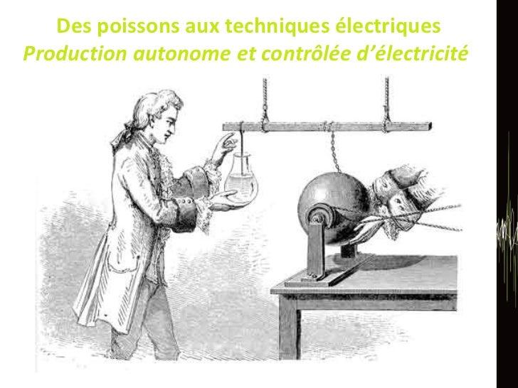 Des poissons aux techniques électriques Production autonome et contrôlée d'électricité