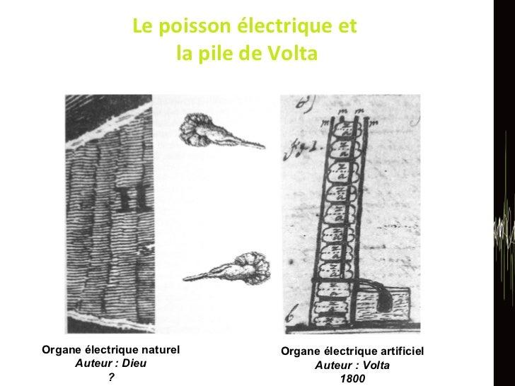 Le poisson électrique et  la pile de Volta Organe électrique naturel Auteur : Dieu ? Organe électrique artificiel Auteur :...