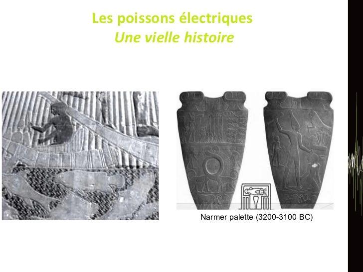 Les poissons électriques  Une vielle histoire Narmer palette (3200-3100 BC)