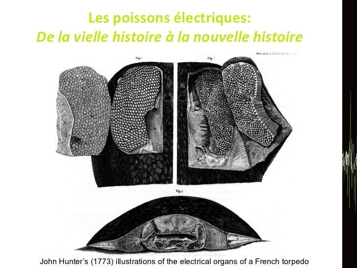 Les poissons électriques:  De la vielle histoire à la nouvelle histoire  John Hunter's (1773) illustrations of the electri...