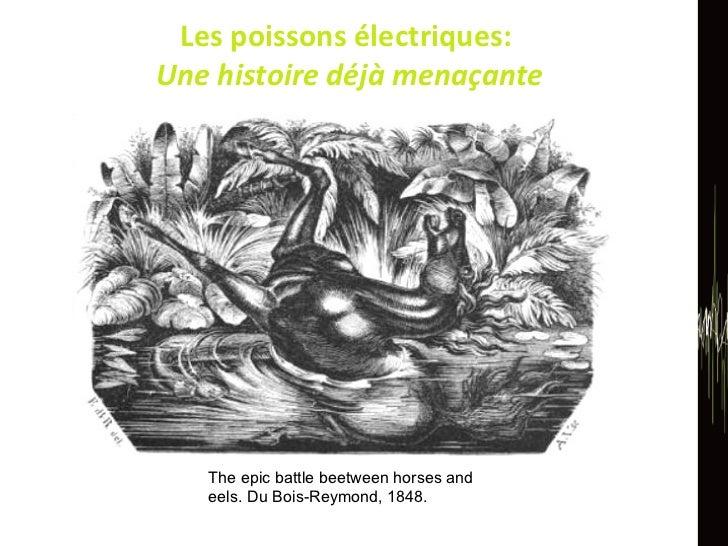 Les poissons électriques:  Une histoire déjà menaçante The epic battle beetween horses and eels. Du Bois-Reymond, 1848.