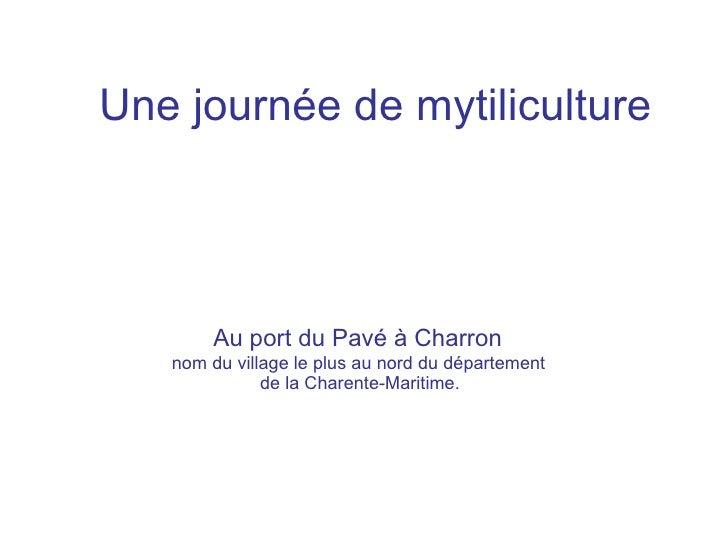 Une journée de mytiliculture       Au port du Pavé à Charron   nom du village le plus au nord du département              ...
