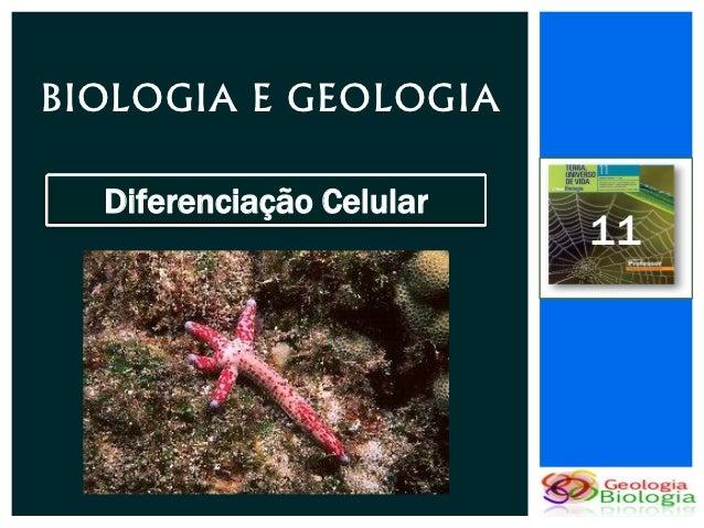BIOLOGIA E GEOLOGIA  Diferenciação Celular                          11