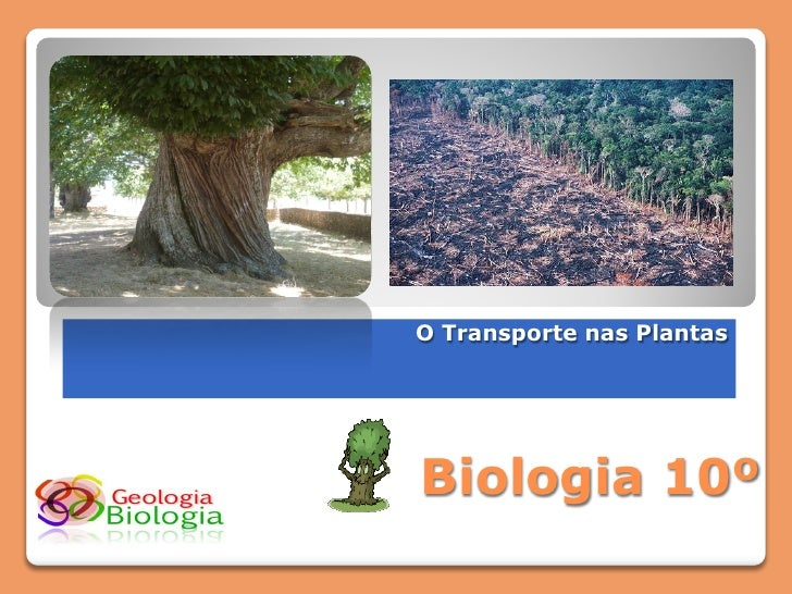 O Transporte nas Plantas     Biologia 10º