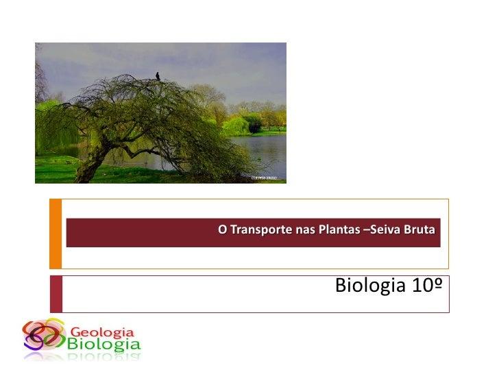O Transporte nas Plantas –Seiva Bruta                       Biologia 10º
