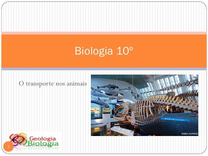 Biologia 10º      O transporte nos animais     1    Nuno Correia 09-10