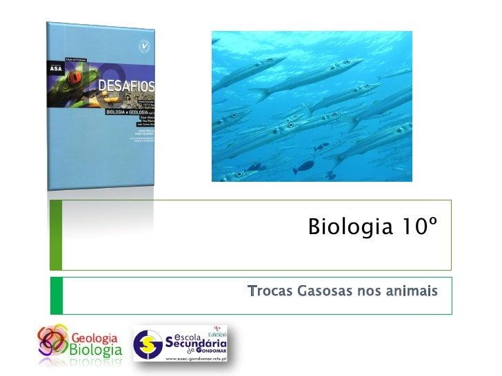 Biologia 10º  Trocas Gasosas nos animais