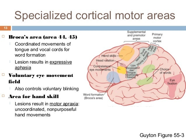 Reflex And Voluntary Control Of Movement