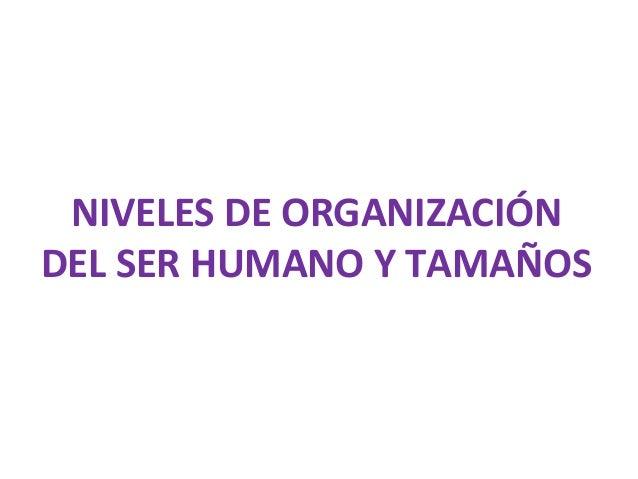 NIVELES DE ORGANIZACIÓN DEL SER HUMANO Y TAMAÑOS