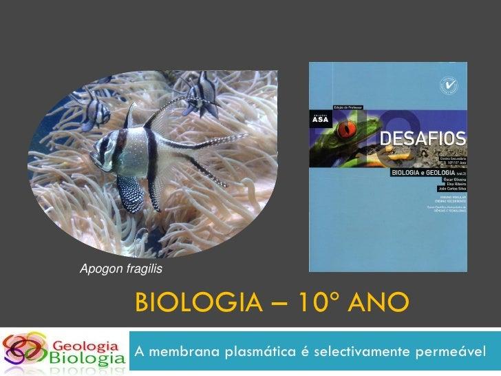 Apogon fragilis             BIOLOGIA – 10º ANO           A membrana plasmática é selectivamente permeável