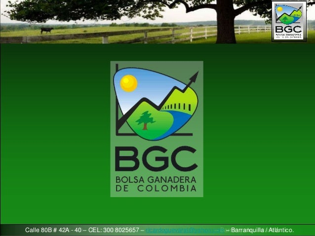Bgc bolsa ganadera de colombia business plan for Margarita saieh barranquilla cra 53