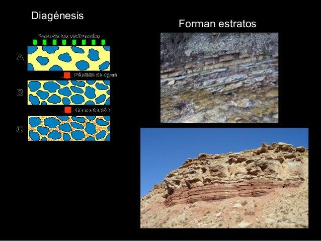 Caliza nummulítica Rocas SEDIMENTARIAS