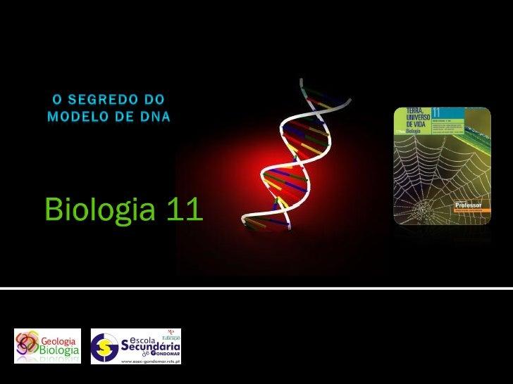    A estrutura da molécula de DNA só foi decifrada após terem sido     analisados os resultados de várias experiências, e...