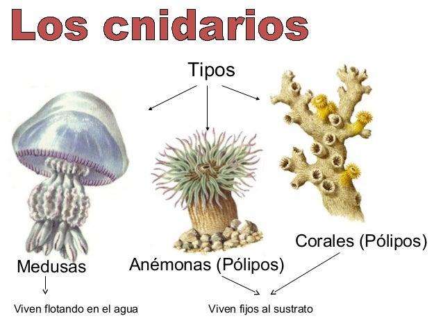 Bg taxonomia