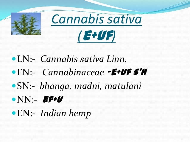 cannabis sativa linn actions and uses Database on medicinal plants used in ayurveda: vol 5 by p c sharma m b yelne and t j dennis and a great selection of similar used, new and collectible books available now at abebookscom.