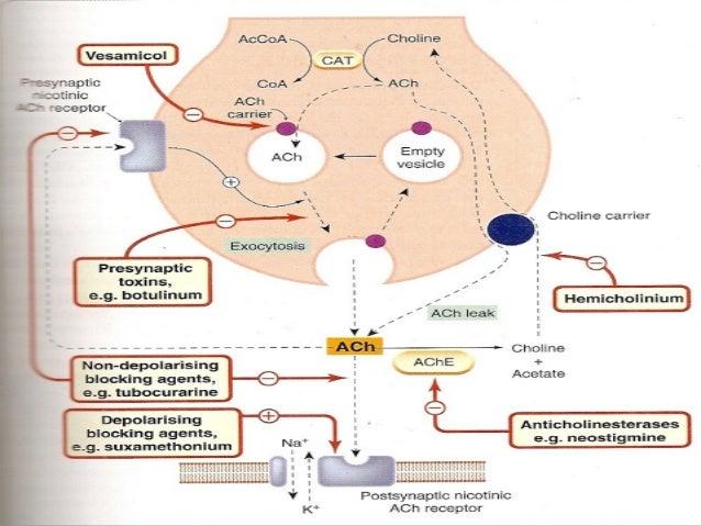 cholinergic and anticholinergic drugs pdf
