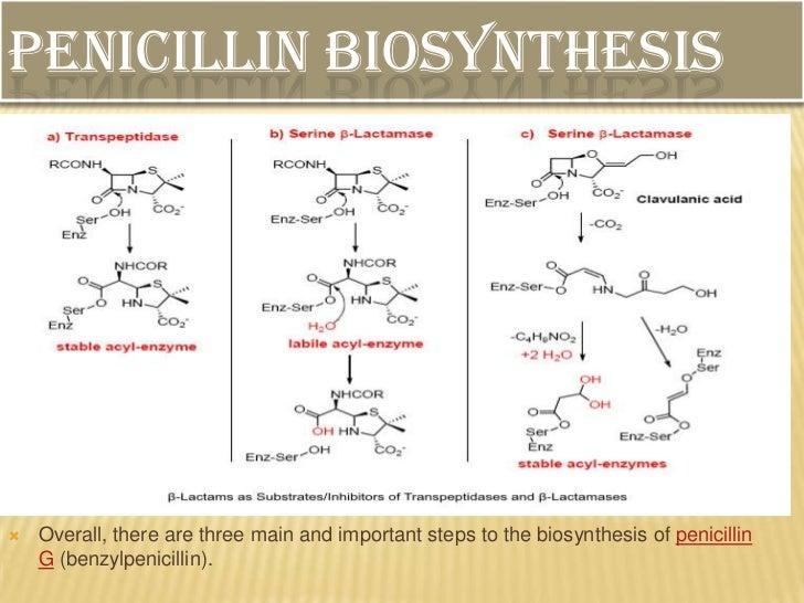 penicillin g process flow diagram example electrical wiring diagram u2022 rh huntervalleyhotels co