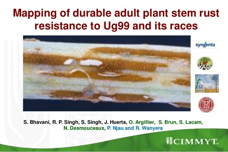 Mapping of durable adult plant stem rust resistance to Ug99 and its races<br />S. Bhavani, R. P. Singh, S. Singh, J. Huert...
