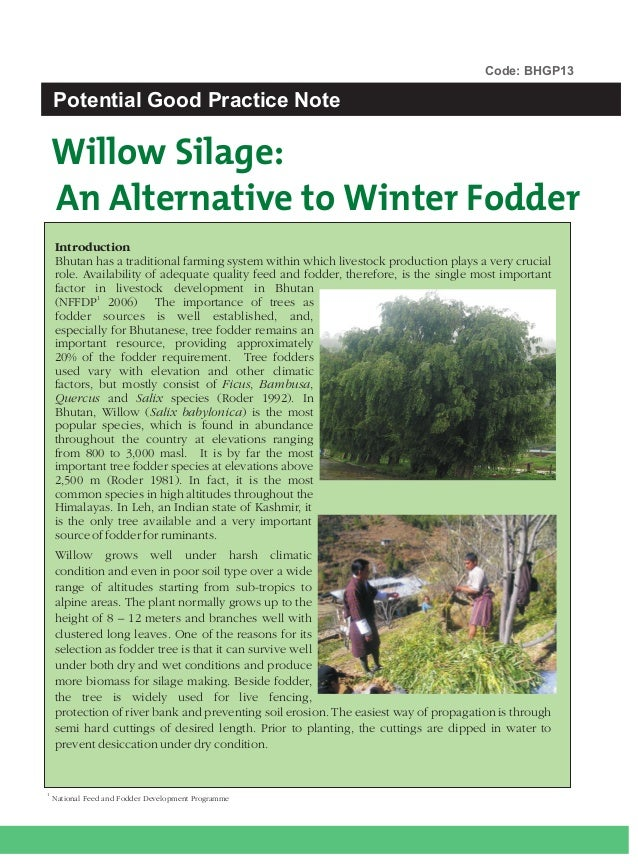 Code: BHGP13    Potential Good Practice Note    Willow Silage:    An Alternative to Winter Fodder    Introduction    Bhuta...