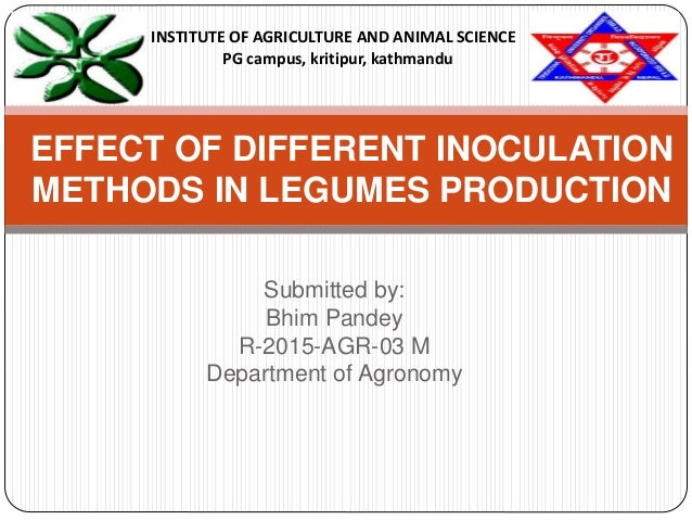 Submitted by: Bhim Pandey R-2015-AGR-03 M Department of Agronomy EFFECT OF DIFFERENT INOCULATION METHODS IN LEGUMES PRODUC...