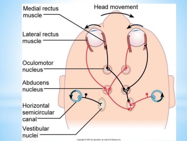 B howard ot process iii vestibular system for ots 4 2015