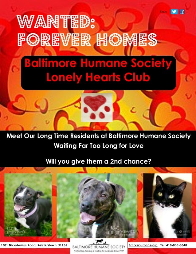 Share                                                    No Adoption Fee in February!         Wanted:         Forever Home...