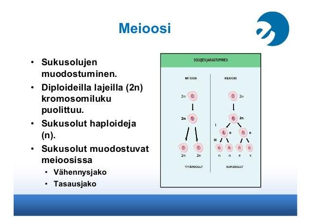 Bi - Suomi24 Keskustelut