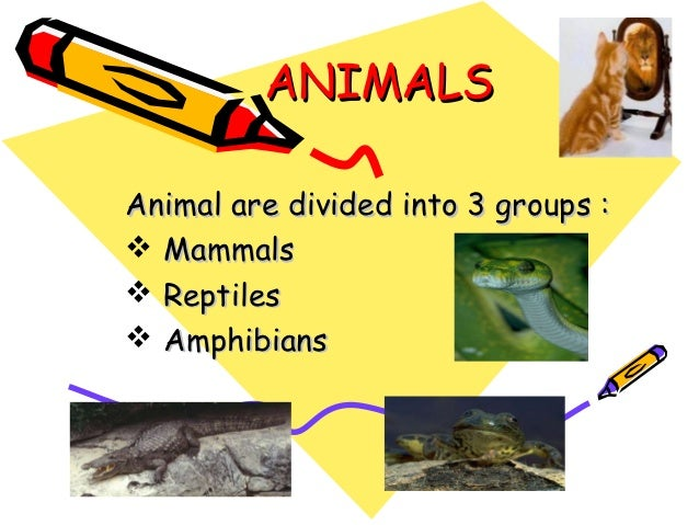 ANIMALSAnimal are divided into 3 groups : Mammals Reptiles Amphibians