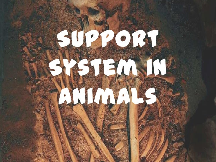 SupportSystem in Animals