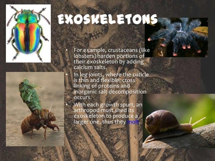What is endoskeleton and exoskeleton - Science - Body ... |Examples Of Exoskeleton Animals