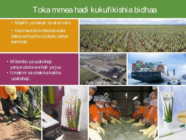 Tokammeahadi kukufikishiabidhaa • Maelfu yahekari zaaloe vera • Hulimwabilamboleawala dawazakuuliavijidudu zenye kemikali ...