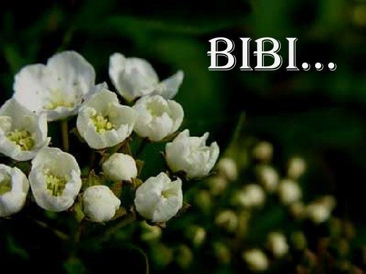 Bibi...<br />