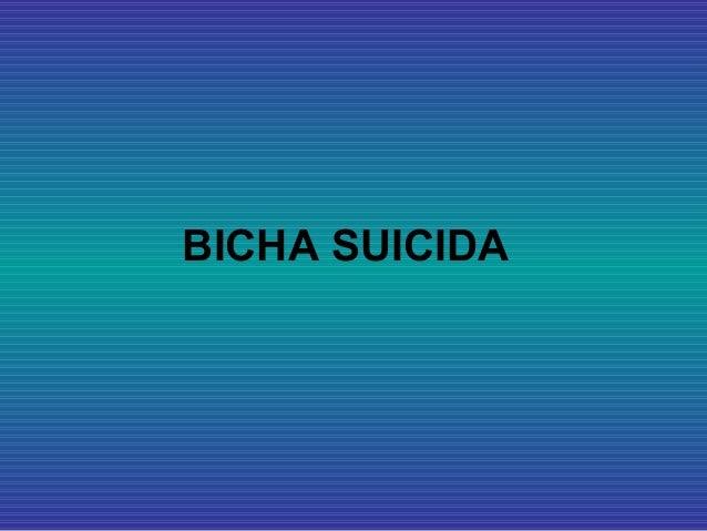 BICHA SUICIDA