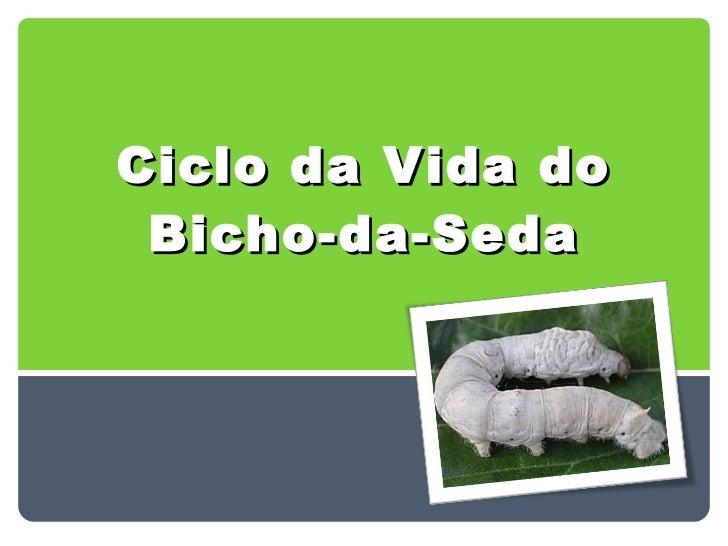 Ciclo da Vida do Bicho-da-Seda