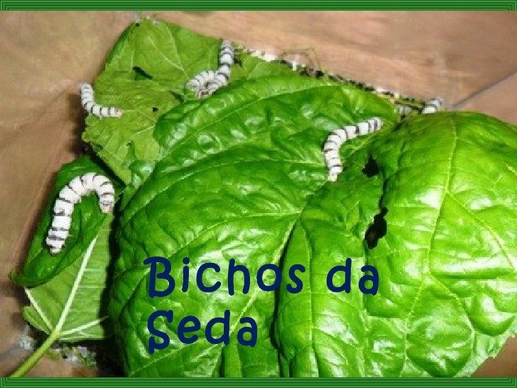 Bichos daSeda