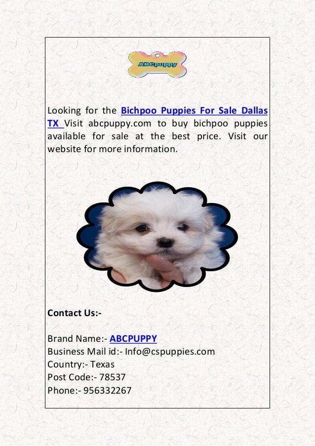 Bichpoo puppies for sale san antonio dallas tx