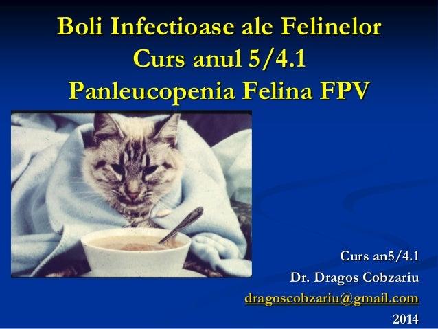 Boli Infectioase ale Felinelor Curs anul 5/4.1 Panleucopenia Felina FPV 010091551263 Curs an5/4.1 Dr. Dragos Cobzariu drag...