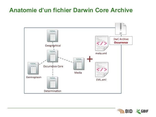 Anatomie d'un fichier Darwin Core Archive